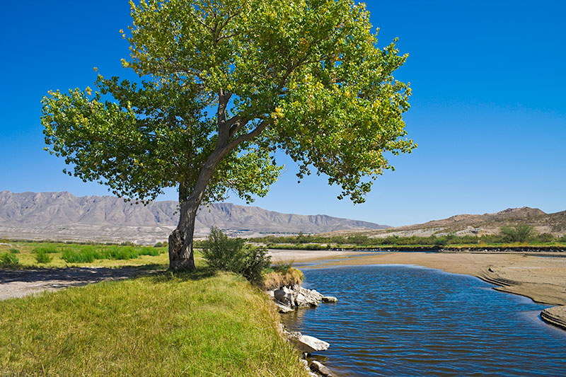 Photo of El Paso landscape with a lone tree alongside the Rio Grande.